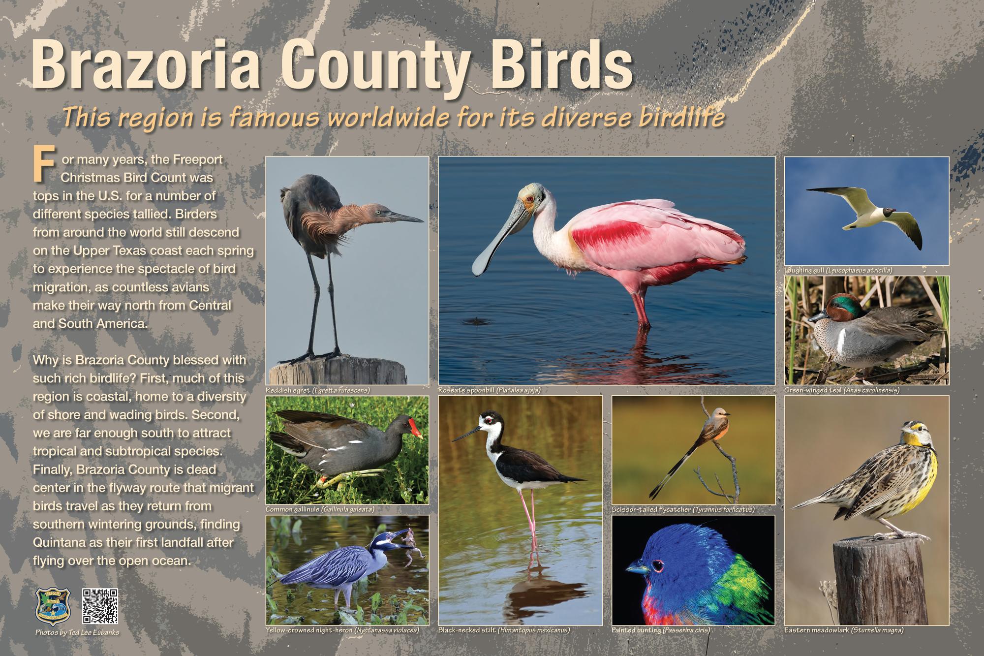 Brazoria Birds-FINAL-031617