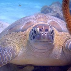 Swim with turtles