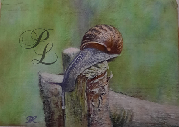 Escargot galopin sur bois Acrylique 15x22