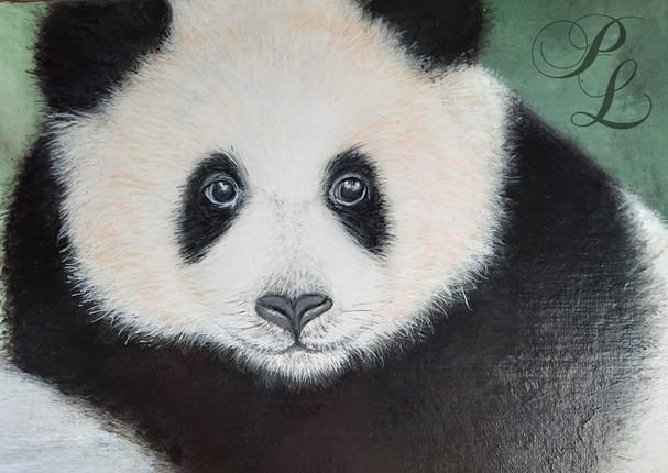 Petit Panda Acrylique 19x27