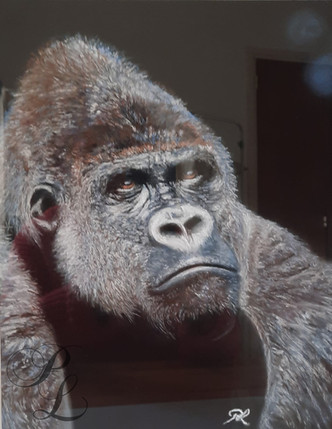 Regard de gorille, dos argenté Pastel sec 26x32