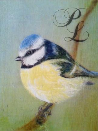 Mesange bleue sur bois Vendu