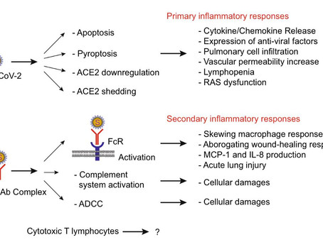 Understanding SARS-CoV-2-Mediated Inflammatory Responses: FromMechanisms to Potential Therapeutic To
