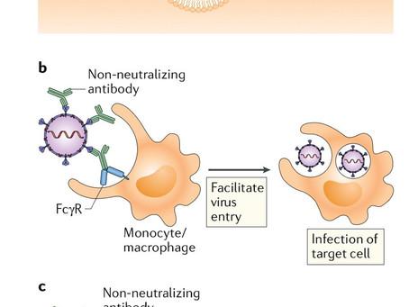 The potential danger of suboptimal antibody responses in COVID-19