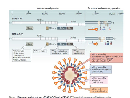 Complete Study of Corona-virus structure,  Vaccines, Drug discovery, Infectious diseases