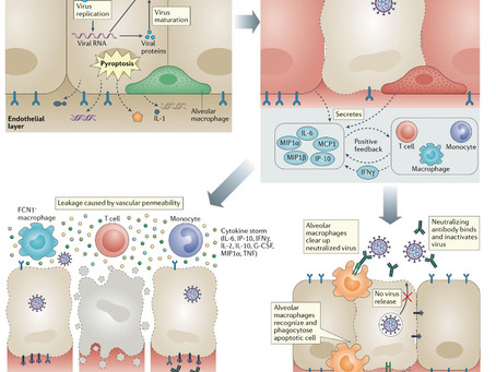The trinity of COVID-19: immunity, inflammation and intervention