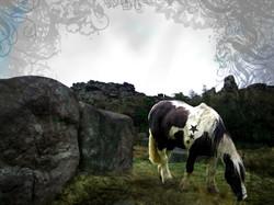 Horse & Hard Rock