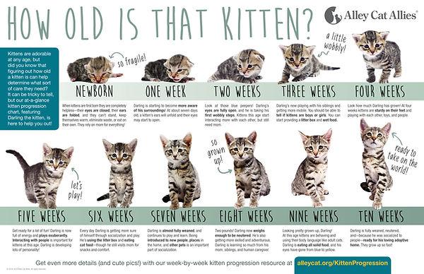 Kitten-Progression-FINAL-1.jpg