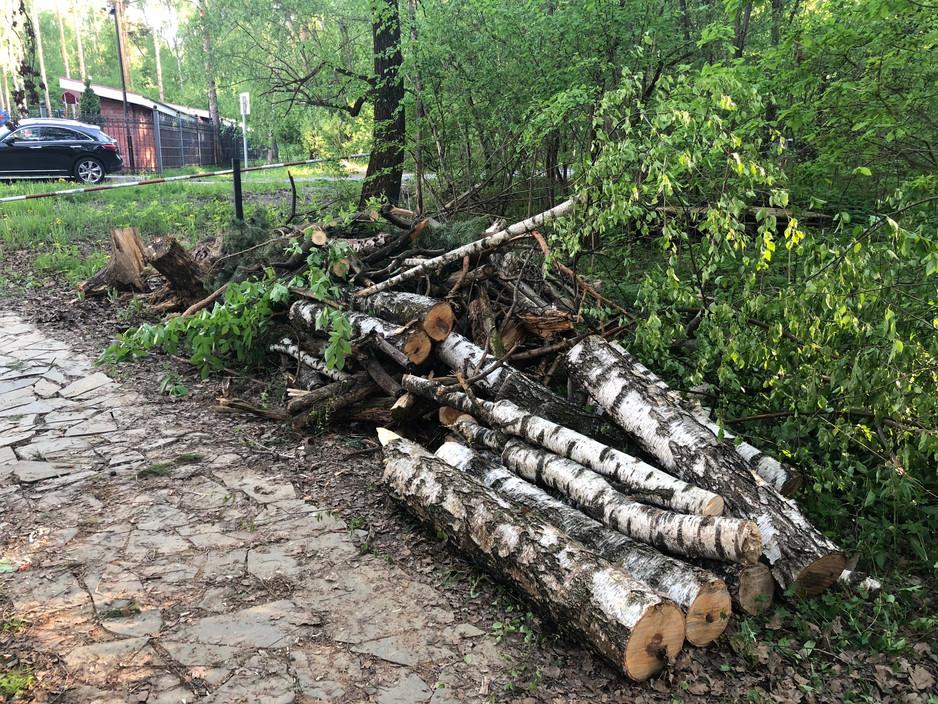 Уборка в лесу и небольшие улучшения.