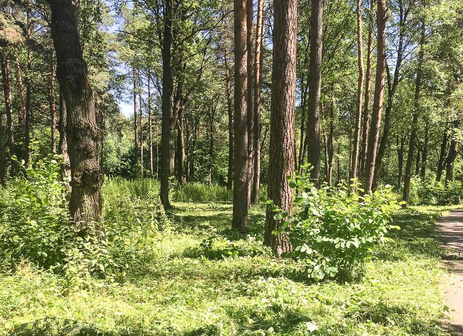 Мы снова убирали лес