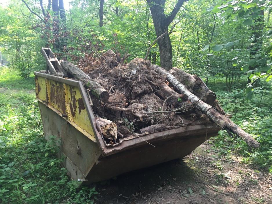 Отчет о 5 уборке леса