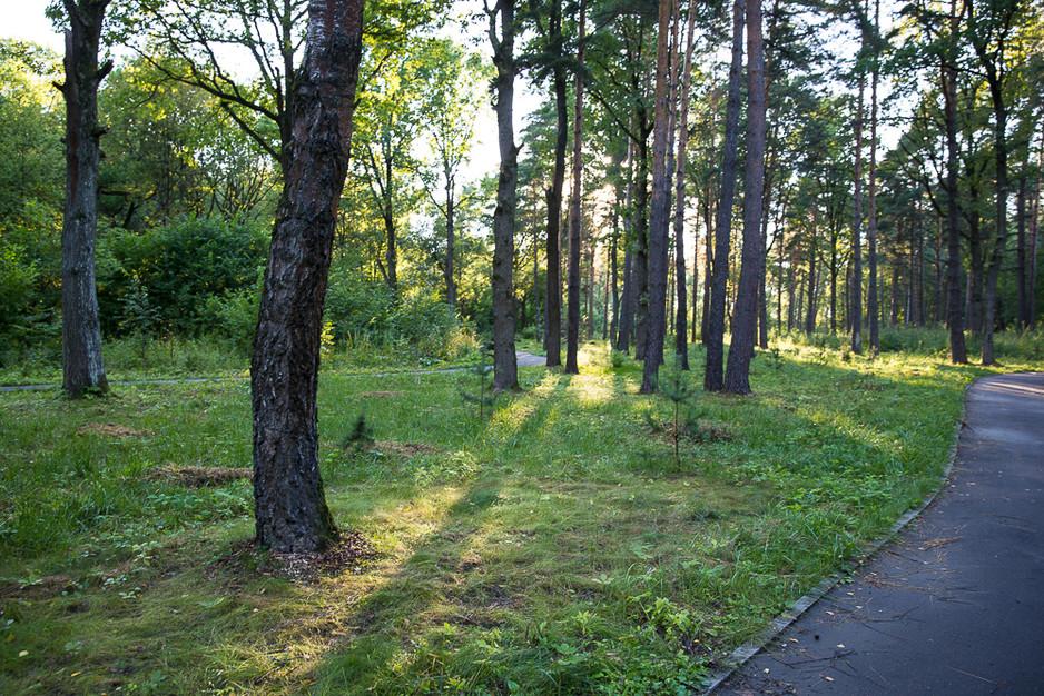 Объединенный отчет о 3 и 4 уборке леса