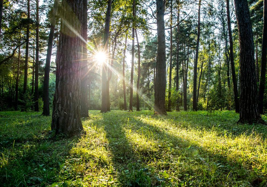Покос травы в лесу 2018