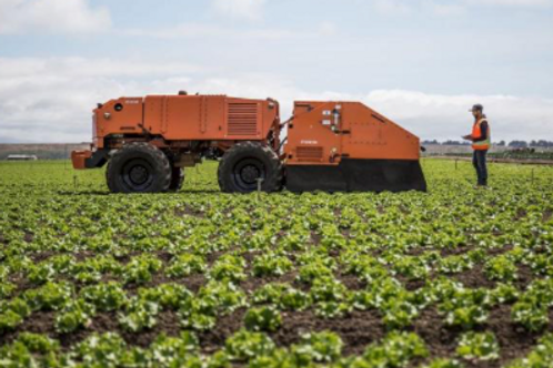 Farmwise robot weeds mid-size vegetables field