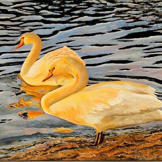Swans Under the Sun