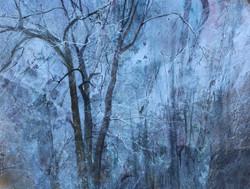 December Woods