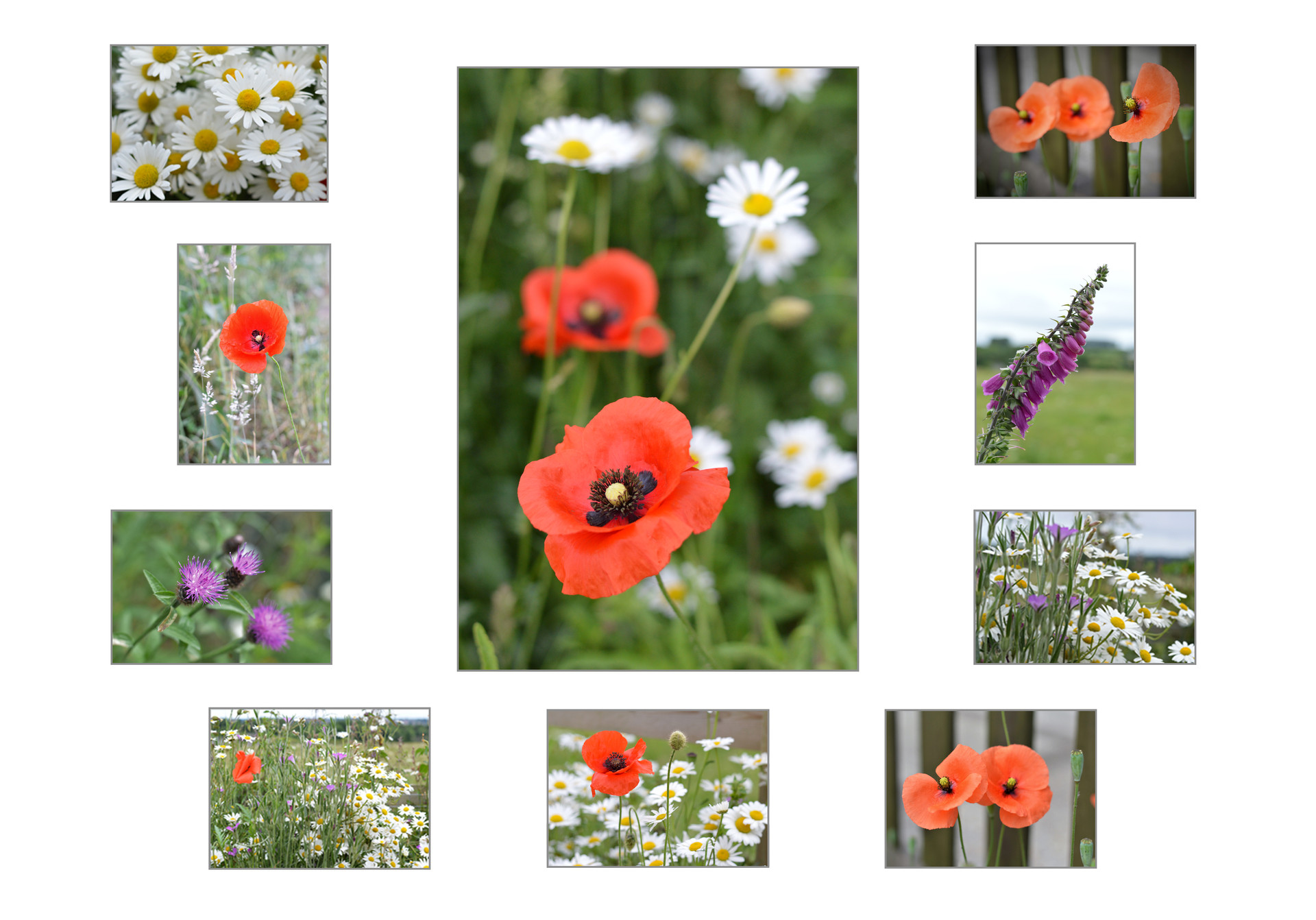 Wildflower Card Collection (10 images).j