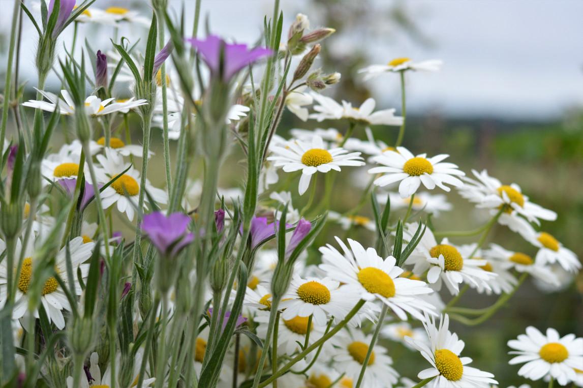 Wildflower 5.jpg
