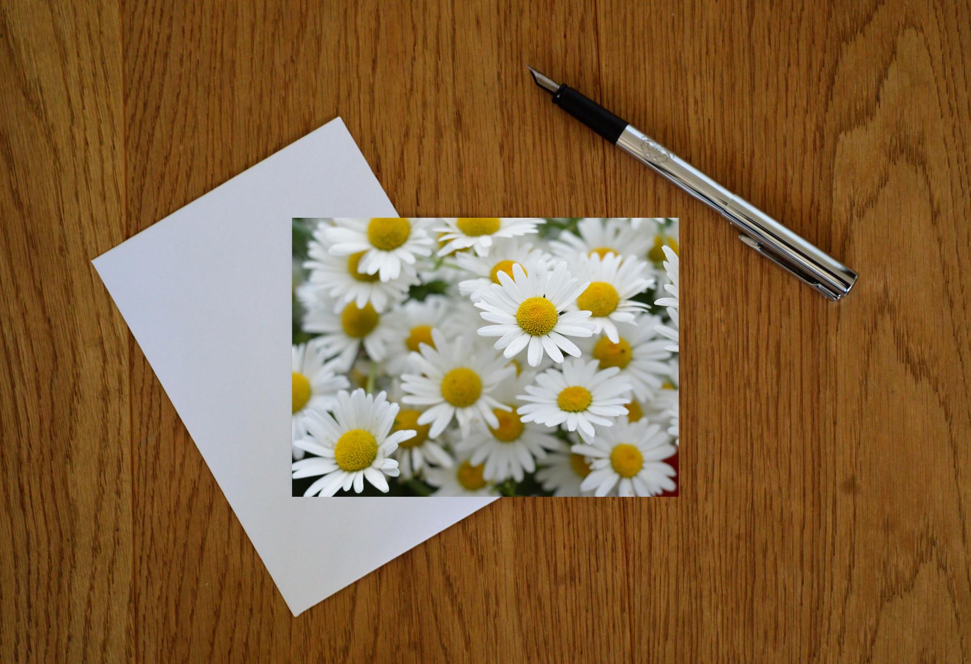 Wildflower 1 (web image).jpg
