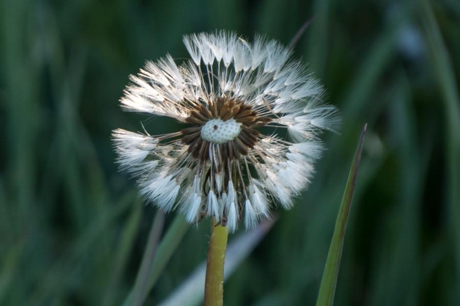 Fairy Seeds
