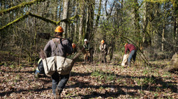 Oregon planting 2018 4.JPG