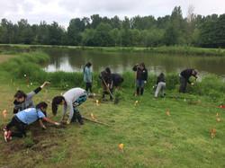 Oregon planting.JPG