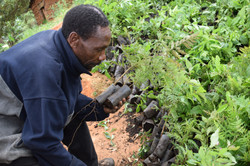 Tanzania planting 4.JPG