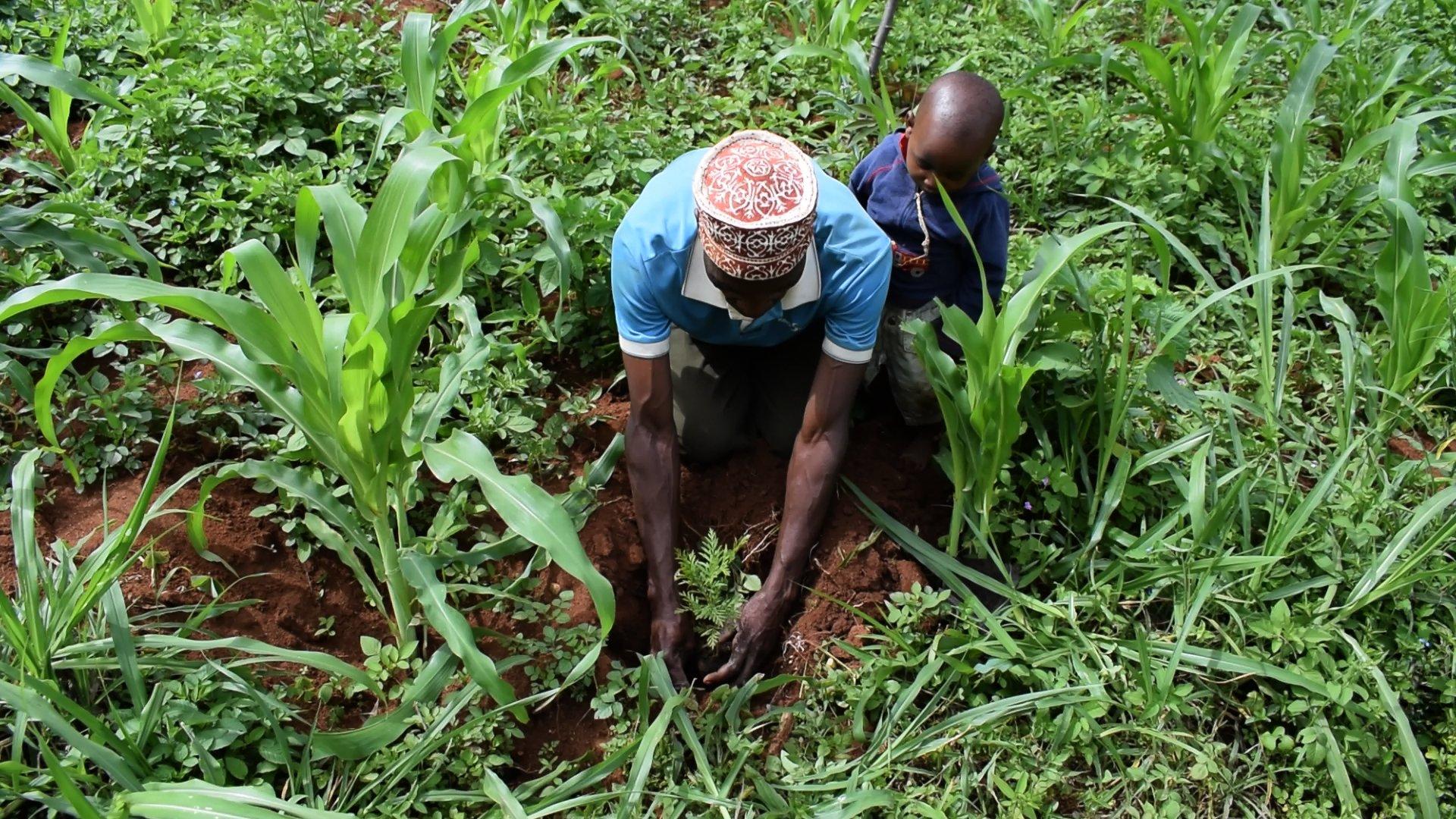 Tanzania planting 2.jpg