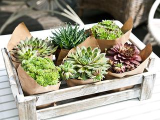 Суккуленты - уход за растениями