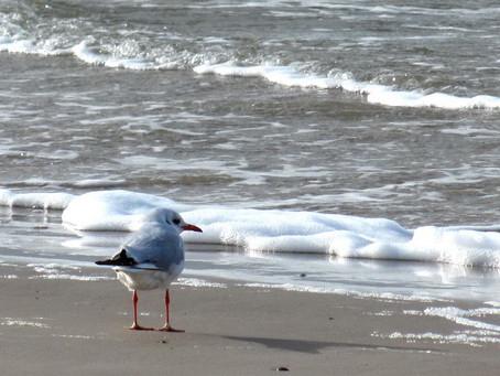 Голос моря, голос свободы