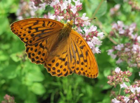 Бабочки в теплице