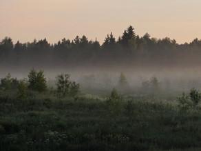 Через лес
