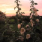 12 Доклад о саде.jpg