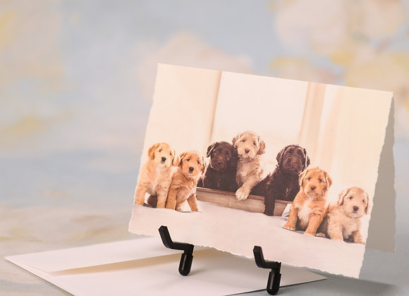 Seven Colorful Labradoodles