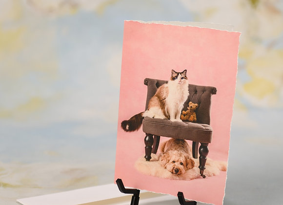 Ragdoll Sitting on a Chair on top of Labradoodle