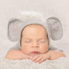 Baby Elephant Newborn
