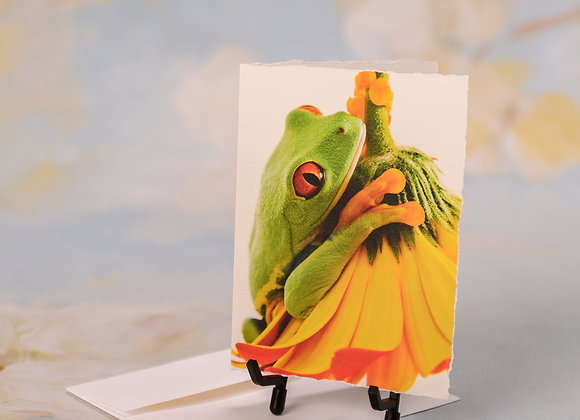 Red Eyed Tree Frog on Gerber Daisy