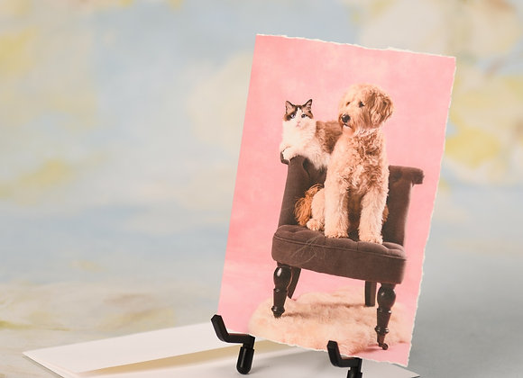 Labradoodle & Ragdoll Sitting on a Chair Together