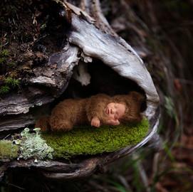 Newborn Baby Bear Tree
