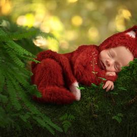 Newborn Fox in a Tree