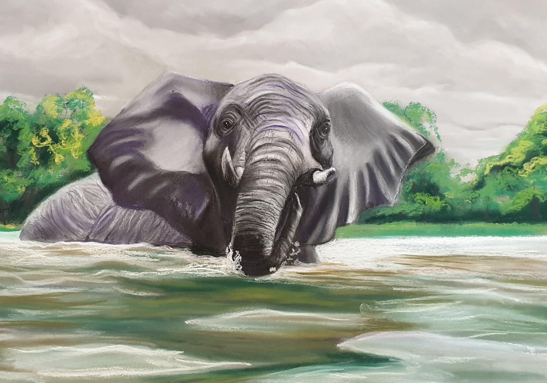 Elephant%201_edited.jpg
