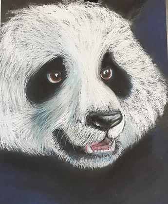 Panda%201_edited.jpg