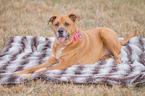 Fall photos of dog laying on blanket in
