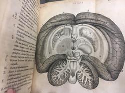 De anima brutorum (1672) Thomas Willis