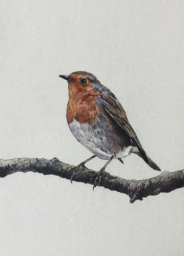 Greg Moore - Robin, Unframed Drypoint Etching