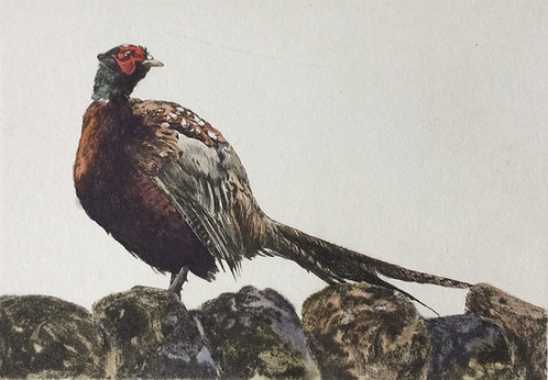 Greg Moore - Pheasant, Unframed Drypoint Etching