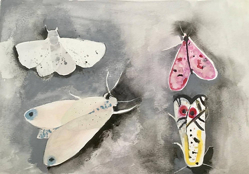 Maree Hughes - Moths, Watercolour
