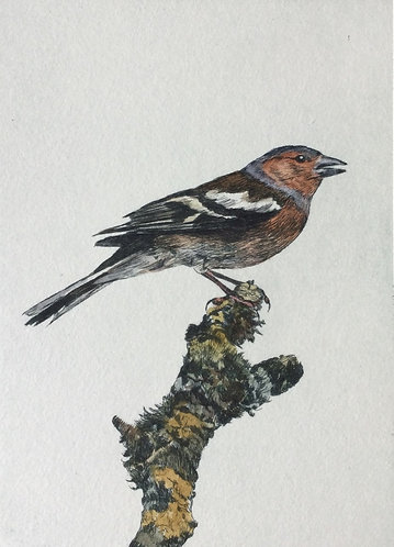 Greg Moore - Chaffinch, Unframed Drypoint Etching