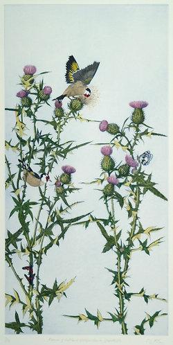 Christopher Allan - Flower of Scotland: Goldfinch on Spearthistle