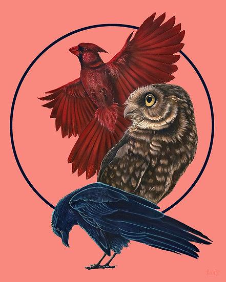 Bird Kin Messages Print